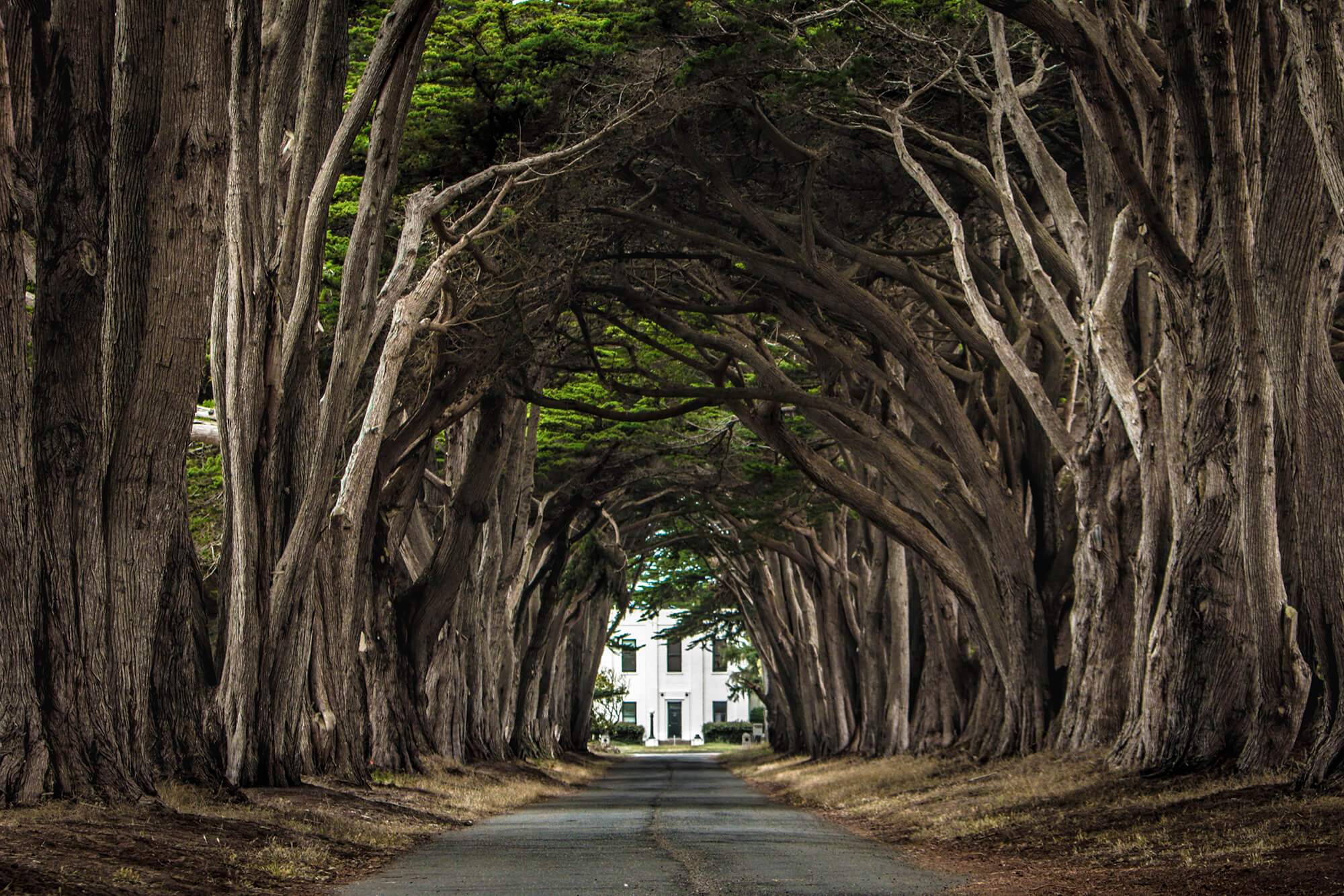 Cypress Tree Tunnel - Point Reyes