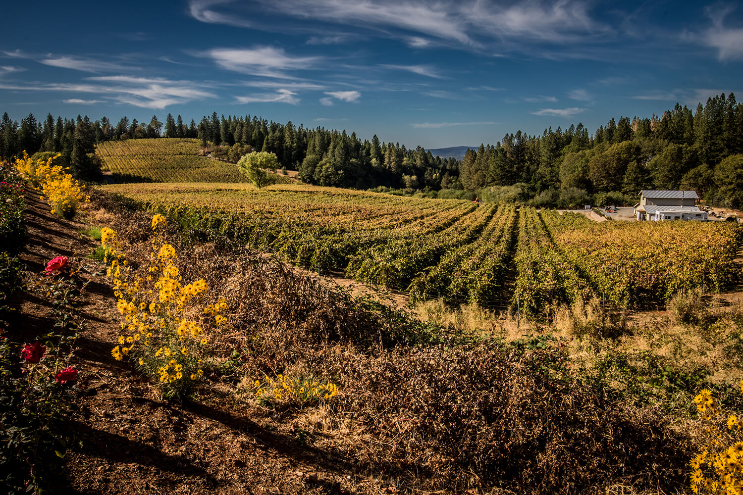 fall_photography_el_dorado_county_winery_apple_hill
