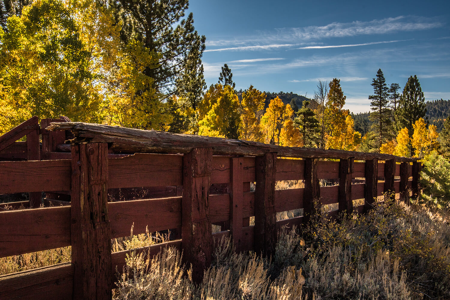 fall_photography_hope_valley_cattle_ranch