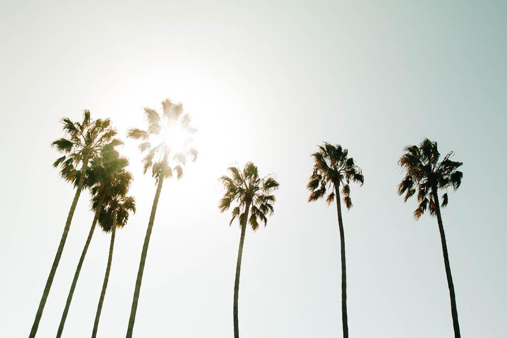 Ventura, CA - Palm Trees