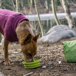 Sea2Summit - Dog Camping Food Bowl and Bag