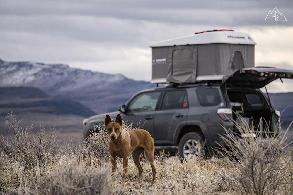 Medical preparedness when Camping with Dog