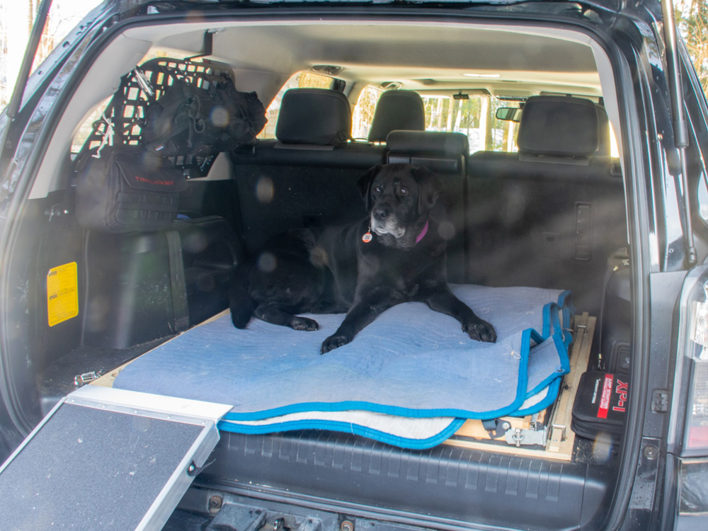 Discount Ramps Folding Dog Ramps: The Perfect Kit for Overlanding in the 5th Gen 4Runner with an Older Dog
